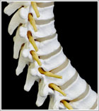 spinal-cord-injury